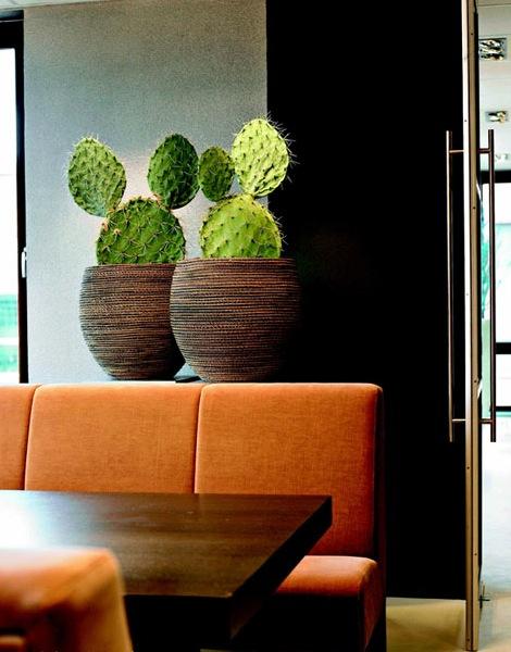Stunning pflanzen f r innen pictures thehammondreport for Hausmittel gegen fliegen in blumenerde