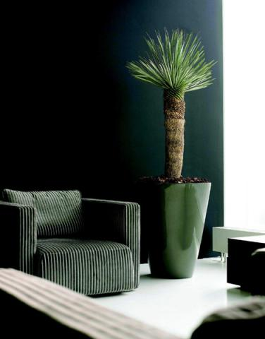 otto blumen floristik dekoration raumbegr nung und. Black Bedroom Furniture Sets. Home Design Ideas